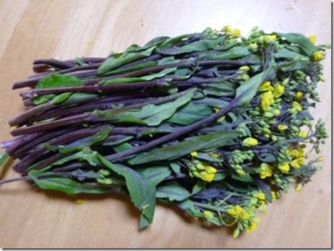草木染めにも使える野菜「コウサイタイ」