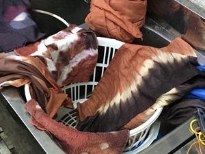イヌ槇で草木染するとレンガ色。鉄媒染はこげ茶色