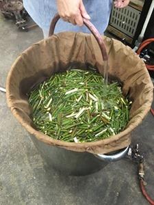 剪定した梅の枝を刻んで煮出し、草木染に使います