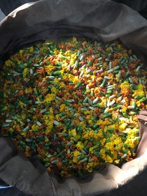 草木染に使うマリーゴールド