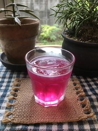 京都・大原の赤紫蘇で作ったしそジュースを草木染教室の終わりに