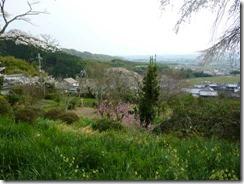 桜の時期の京都・井手町の地蔵禅院からの風景