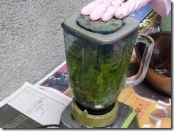 藍の生葉染めの方法3。藍の葉と水を入れミキサーに