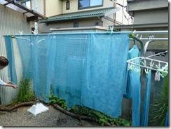 藍の生葉染めの方法8。干して完成