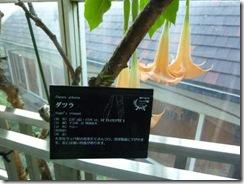 布引ハーブ園の温室