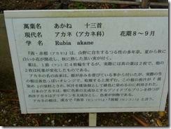 「茜」奈良・万葉植物園