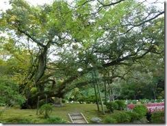 奈良・万葉植物園の真ん中の大きな木