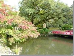 奈良・万葉植物園の真ん中の池と大きな木