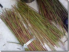 草木染めで使う梅の枝