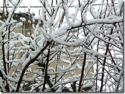 井手町は雪景色
