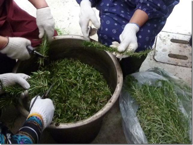 ローズマリーで草木染、枝をきざむ