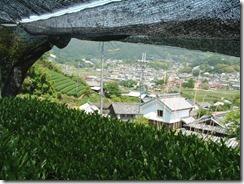 和束町の茶畑から。下に町並みが見える