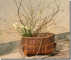 クロモジの黄色い花
