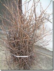 草木染に使う、玉川提の桜の枝