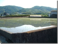 井手町の田植え