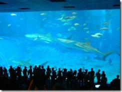 okinawa-churaumi-aquarium-02