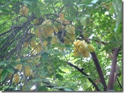 okinawa-tropical-fruits-02