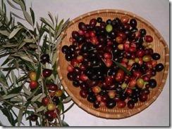 olive-mi-01