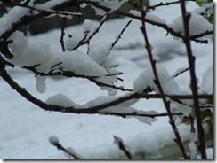 めずらしい井手町の積雪