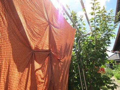 快晴の空のもと柿渋染めしました