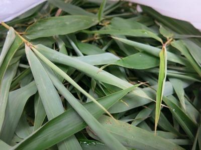 笹(竹)は草木染に使います。